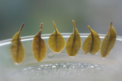 Зеленый чай из Посона (Корея), ранний майский сбор (сё-чак).