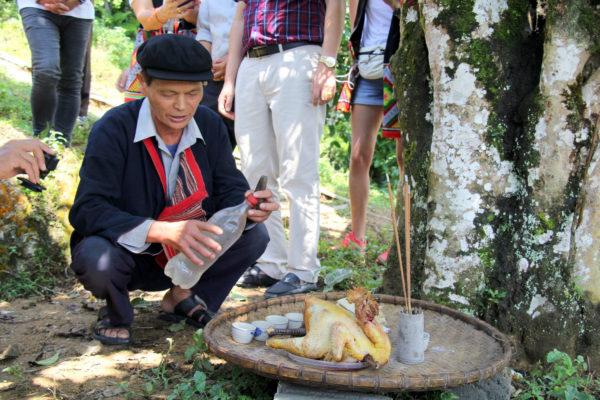 Жертвенный петух под старым чайным деревом. Север Вьетнама.