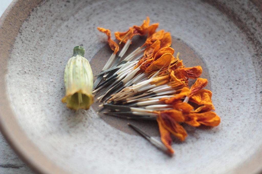 Сушеный и разъятый на части цветок бархатцев
