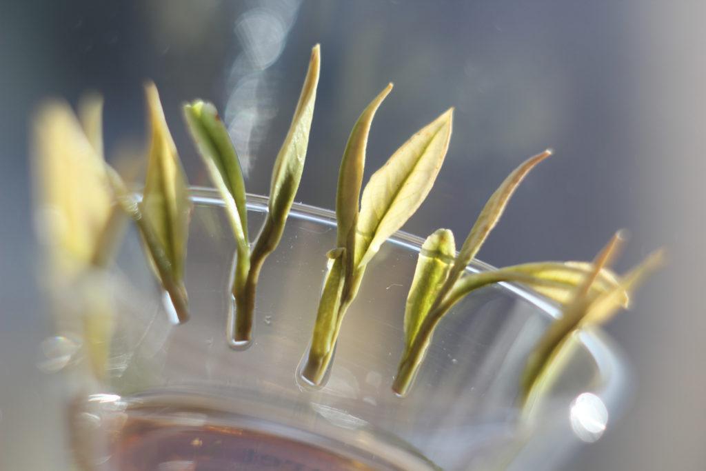 Примерно так выглядят чай из листьев, собранных с кустов-альбиносов