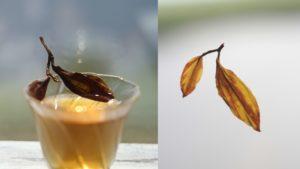 Черный чай Колхида, трехлистный и двухлистный флеши. © Ольга Никандрова